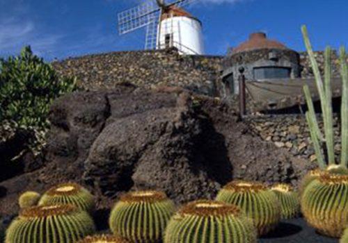 jardin_cactus